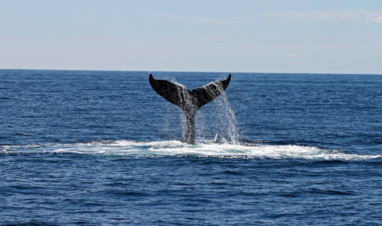 Okyanusları Temizleyen Etki Yatırımı: Mavi Bonolar