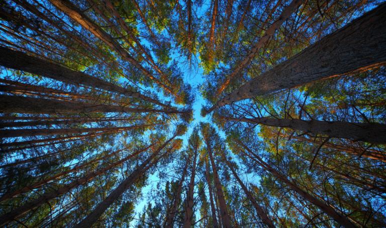 Ormanları Koruyan Etki Yatırımı: Orman Bonoları
