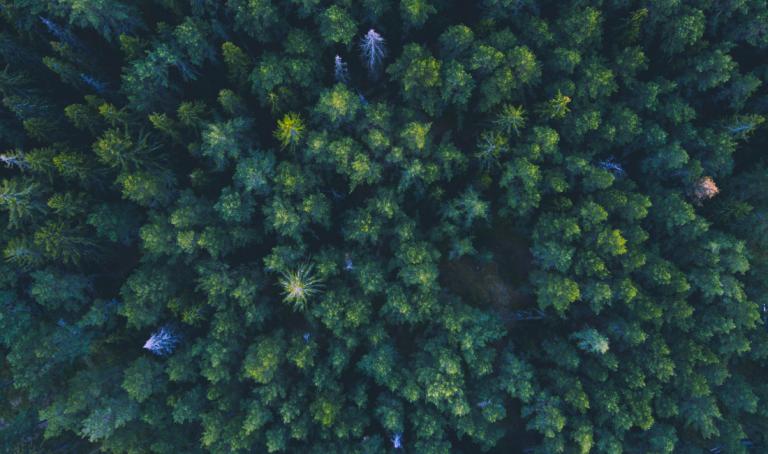 Orman Yangınlarını Önleyen Etki Yatırımı: Orman Dayanıklılığı Bonosu